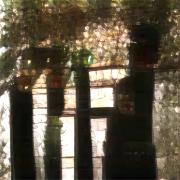 """""""My treetop home"""""""